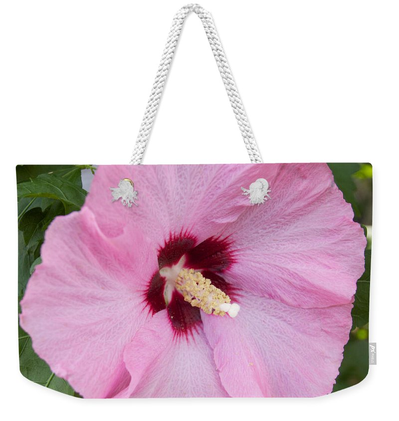 Flower Weekender Tote Bag featuring the photograph Pink by William Norton