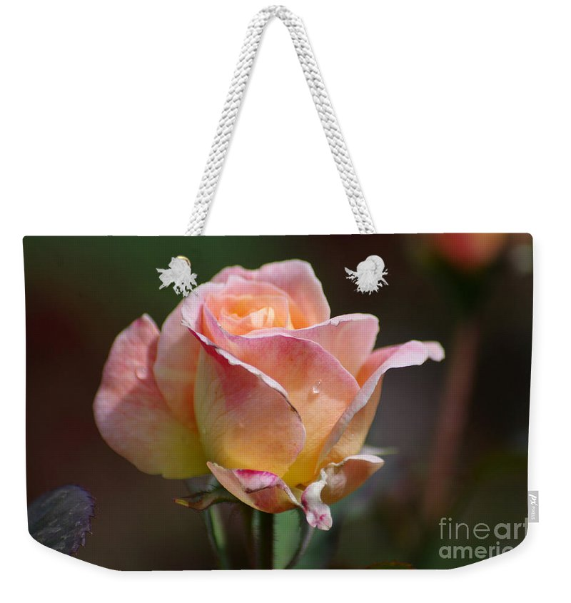 Rose Weekender Tote Bag featuring the photograph Pink Yellow Rose 01 by J M Lister