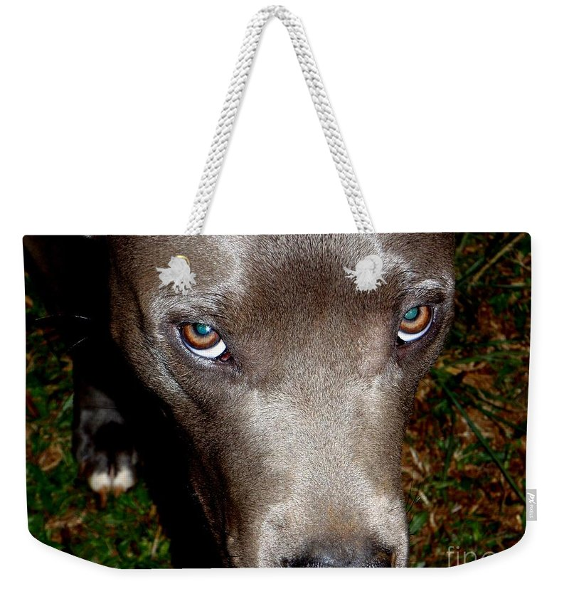 Brown Weekender Tote Bag featuring the photograph Pit Bull - 1 by Mary Deal