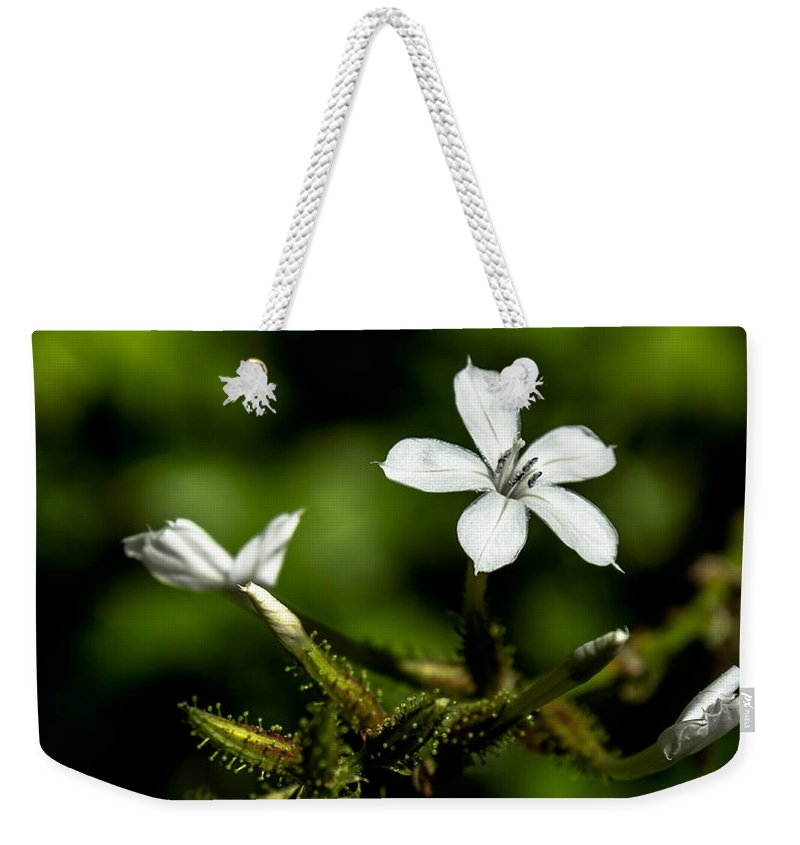 Tiny Flowers Weekender Tote Bag featuring the photograph Pixie Flower by Along The Trail