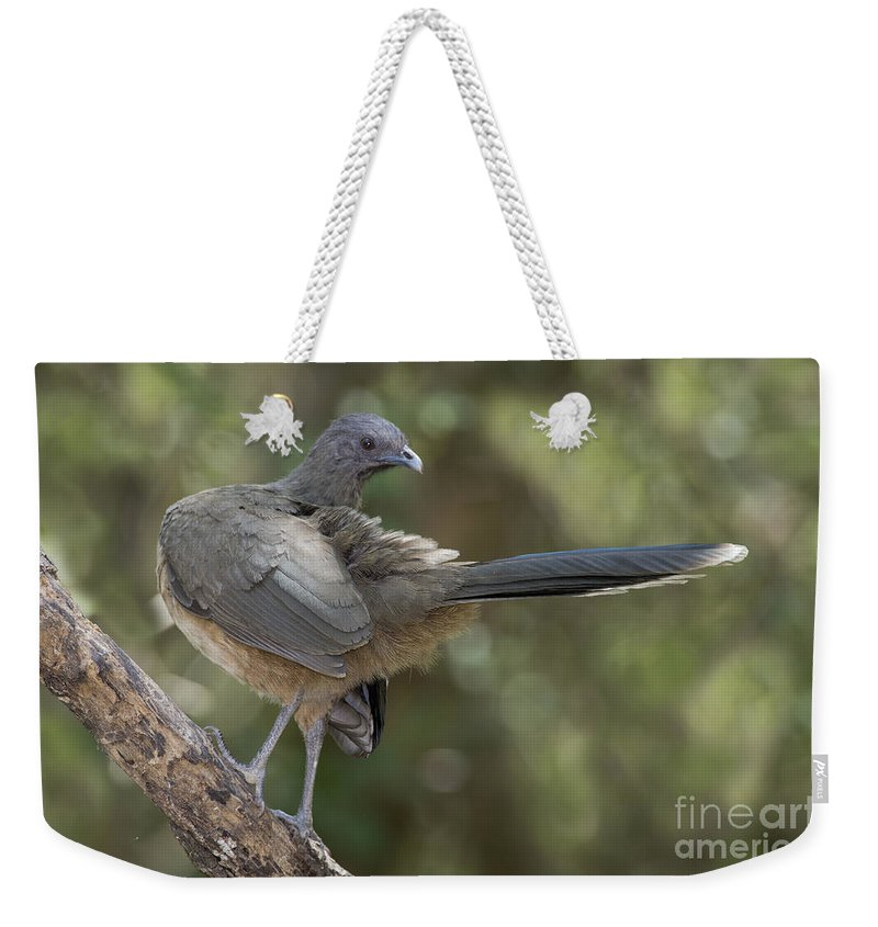 Plain Chachalaca Weekender Tote Bag featuring the photograph Plain Chachalaca by Anthony Mercieca