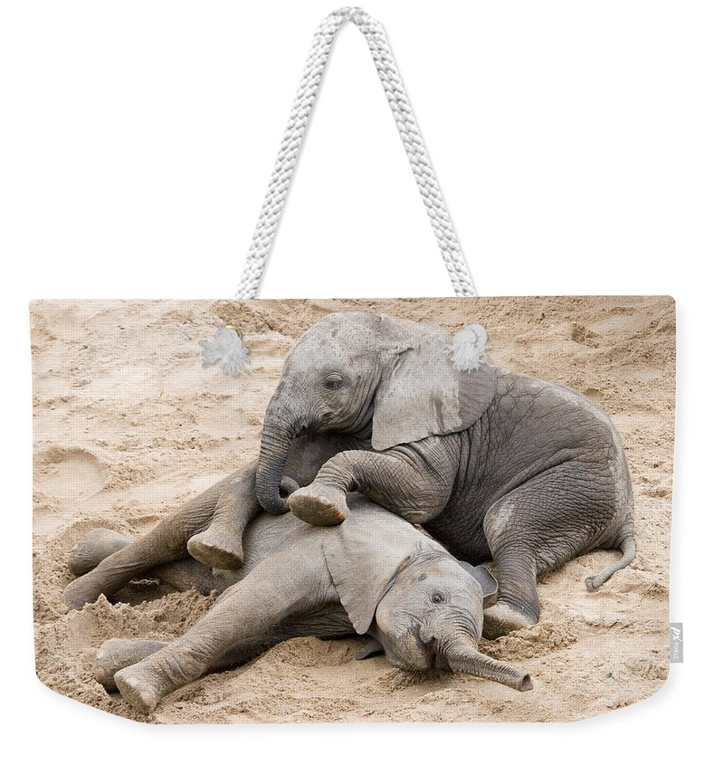 Elephants Weekender Tote Bag featuring the photograph Playful Elephant Calves by Max Waugh