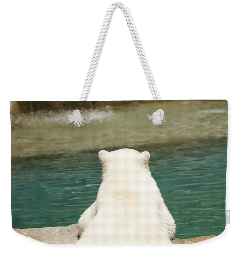 3scape Photos Weekender Tote Bag featuring the photograph Playful Polar Bear by Adam Romanowicz