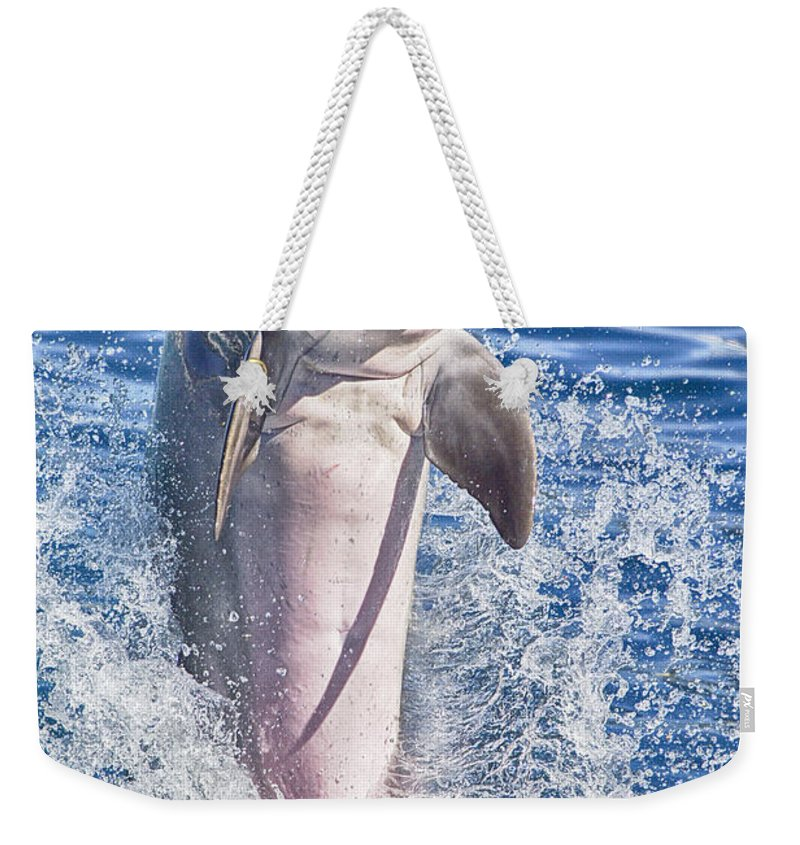 Dolphin Weekender Tote Bag featuring the photograph Playful V8 by Douglas Barnard