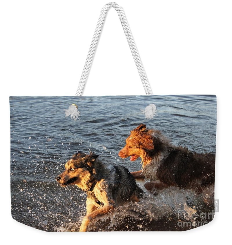 Dogs Weekender Tote Bag featuring the photograph Playing Intensely by Alanna DPhoto
