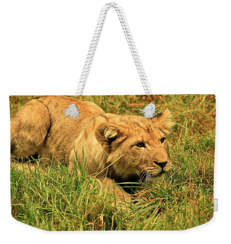 Lion Weekender Tote Bag featuring the photograph Playing With The Siblings by Laddie Halupa