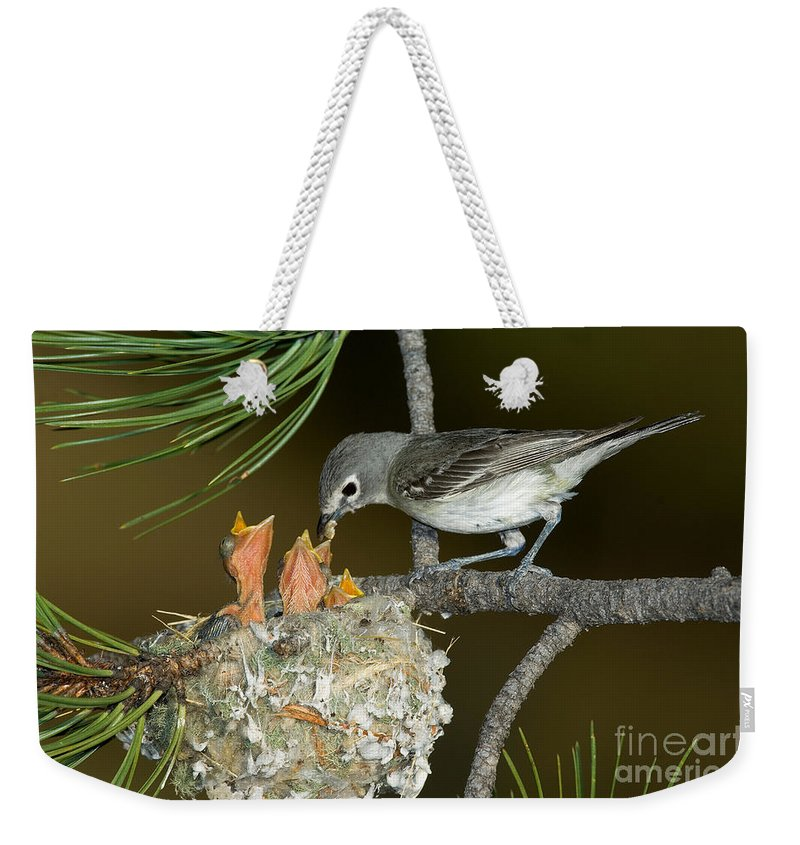 Fauna Weekender Tote Bag featuring the photograph Plumbeous Vireo Feeding Chicks In Nest by Anthony Mercieca