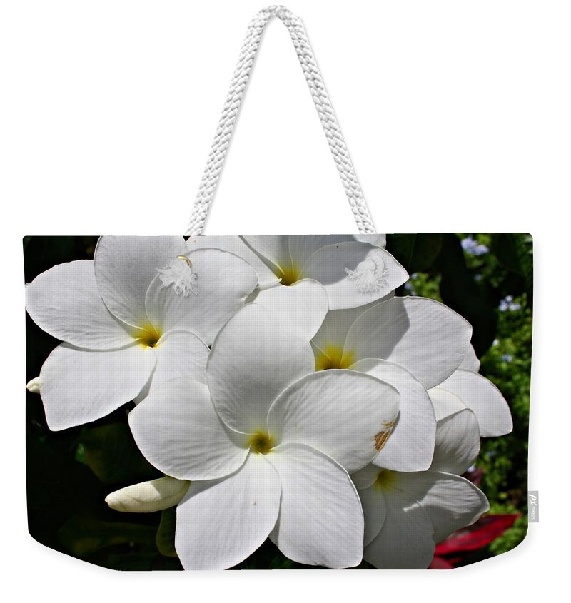 Flowers Weekender Tote Bag featuring the photograph Plumeria Flowers by Marcelo Albuquerque