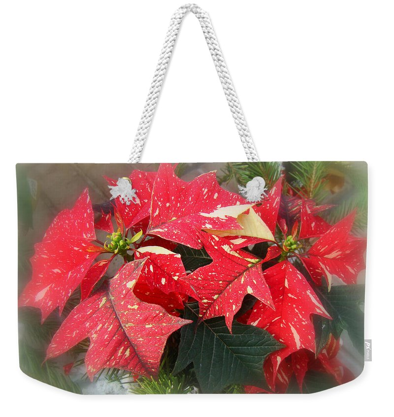 Poinsettia Weekender Tote Bag featuring the photograph Poinsettia In Red And White by Mother Nature