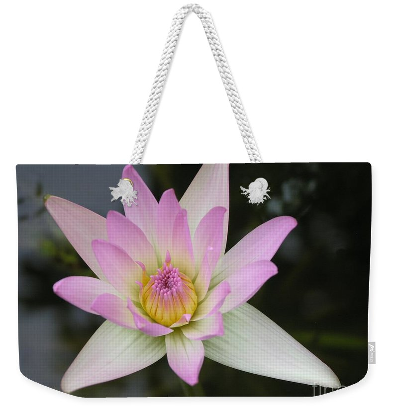 Pointed Pink Lily Weekender Tote Bag featuring the photograph Pointed Pink Lily by Mary Deal