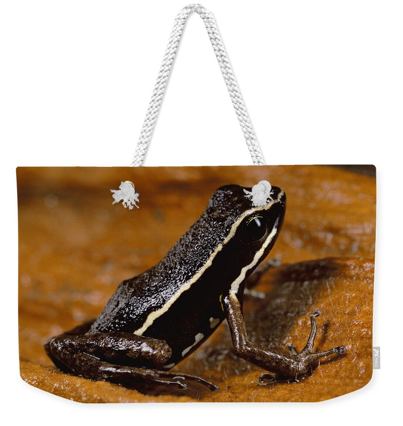 Feb0514 Weekender Tote Bag featuring the photograph Poison Dart Frog Portrait Amazonian by Mark Moffett