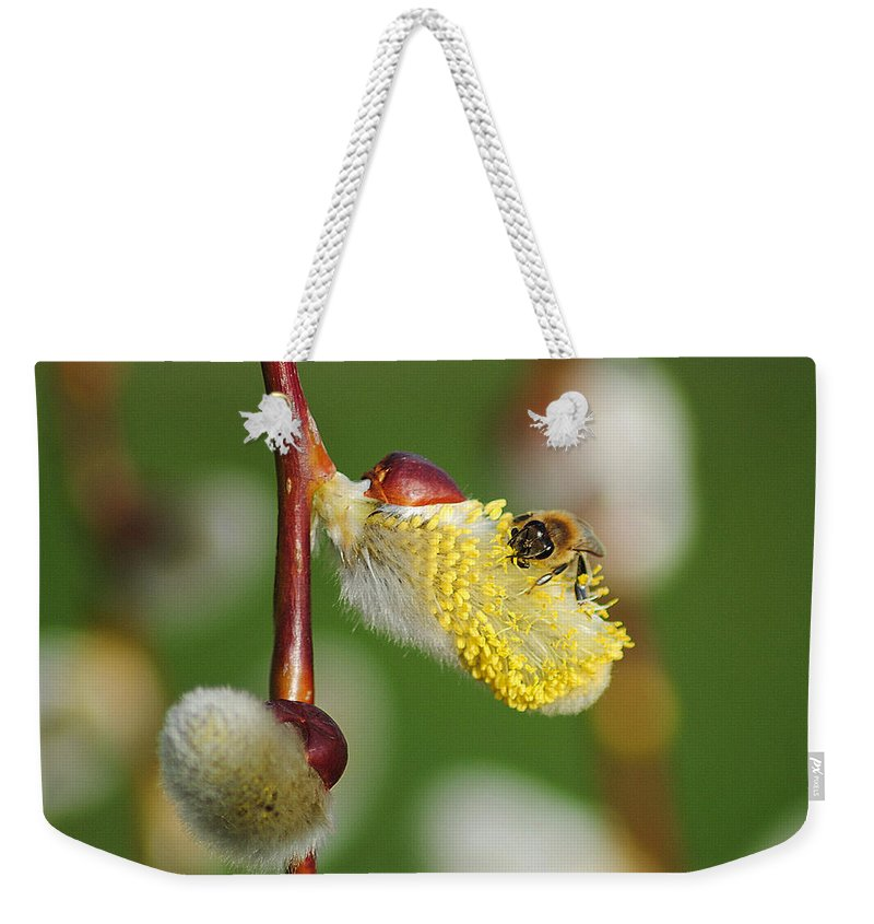 Pollen Weekender Tote Bag featuring the photograph Pollen Feast by Frozen in Time Fine Art Photography
