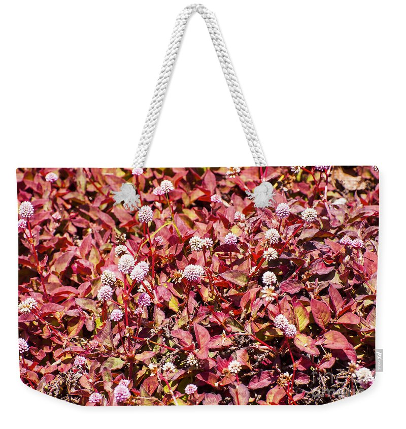 Devastation Trail Ground Cover Polygonum Smartweed Pink Buttons Leaf Leaves Flower Flowers Bloom Blooms Blossom Blossoms Nature Hawaii Volcano National Park Big Island Parks Foliage Weekender Tote Bag featuring the photograph Polygonum by Bob Phillips