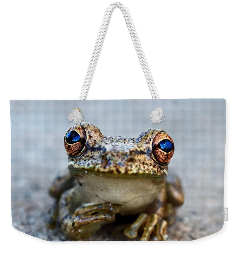Laura Fasulo Weekender Tote Bag featuring the photograph Pondering Frog by Laura Fasulo