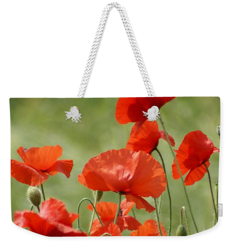 Poppies Weekender Tote Bag featuring the photograph Poppies 1 by Carol Lynch