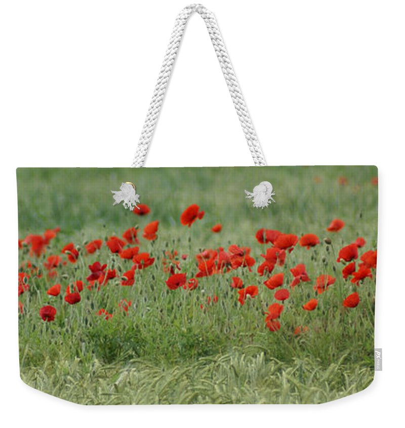 Poppies Weekender Tote Bag featuring the photograph Poppies by Carol Lynch