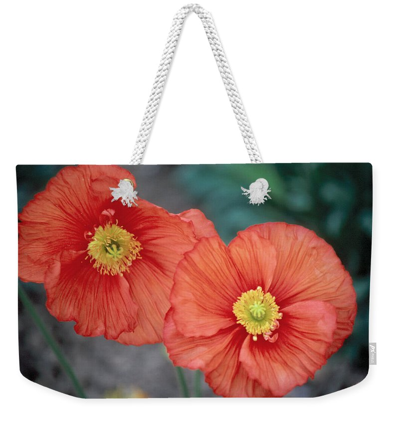 Flower Weekender Tote Bag featuring the photograph Poppy 1 by Andy Shomock