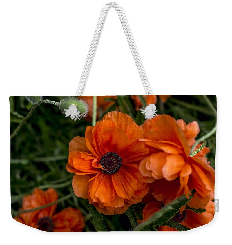 Flowers Weekender Tote Bag featuring the photograph Poppy by Jayne Gohr
