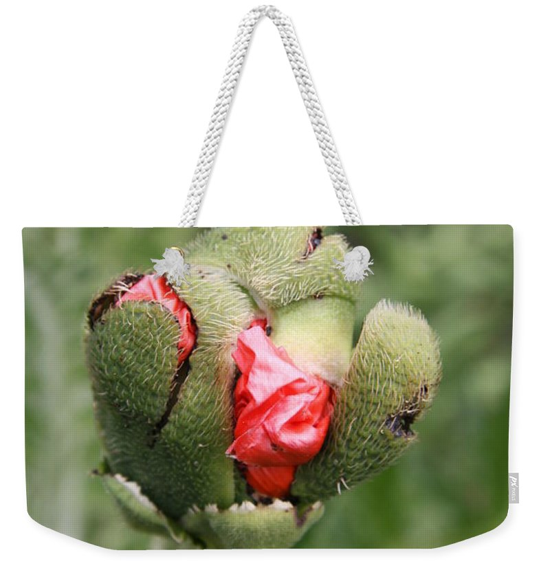 Flowers Weekender Tote Bag featuring the photograph Poppybud by Christiane Schulze Art And Photography