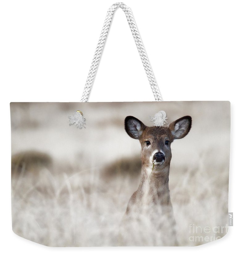 Deer Weekender Tote Bag featuring the photograph Portrait Of A Fawn by Jim Garrison