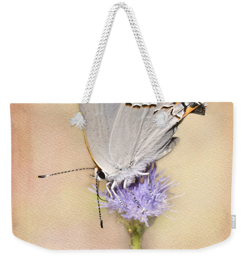 Gray Hairstreak Butterfly Weekender Tote Bag featuring the photograph Portrait Of A Gray Hairstreak by Betty LaRue