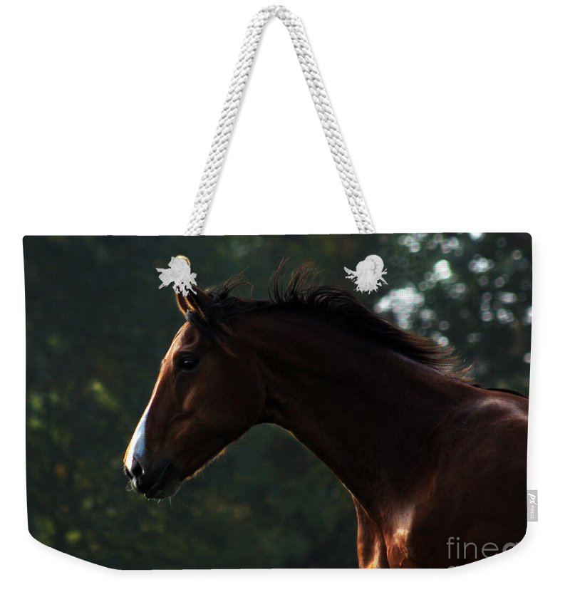 Horse Weekender Tote Bag featuring the photograph Portrait Of A Horse by Angel Ciesniarska
