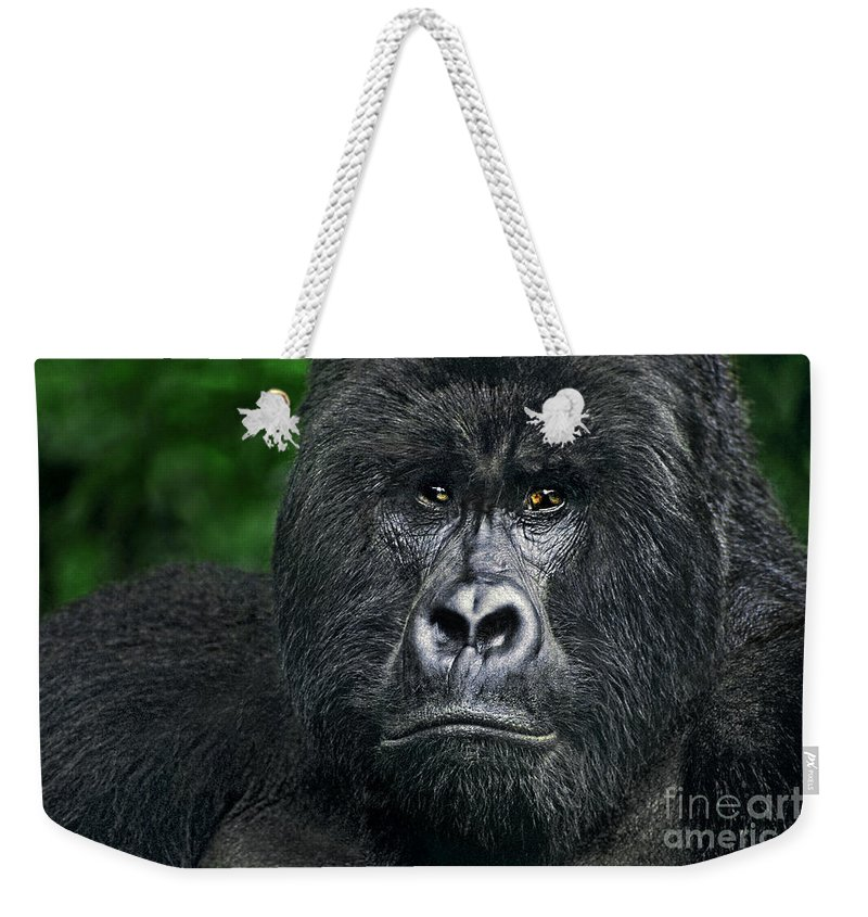 Africa Weekender Tote Bag featuring the photograph Portrait Of A Wild Mountain Gorilla Silverbackhighly Endangered by Dave Welling