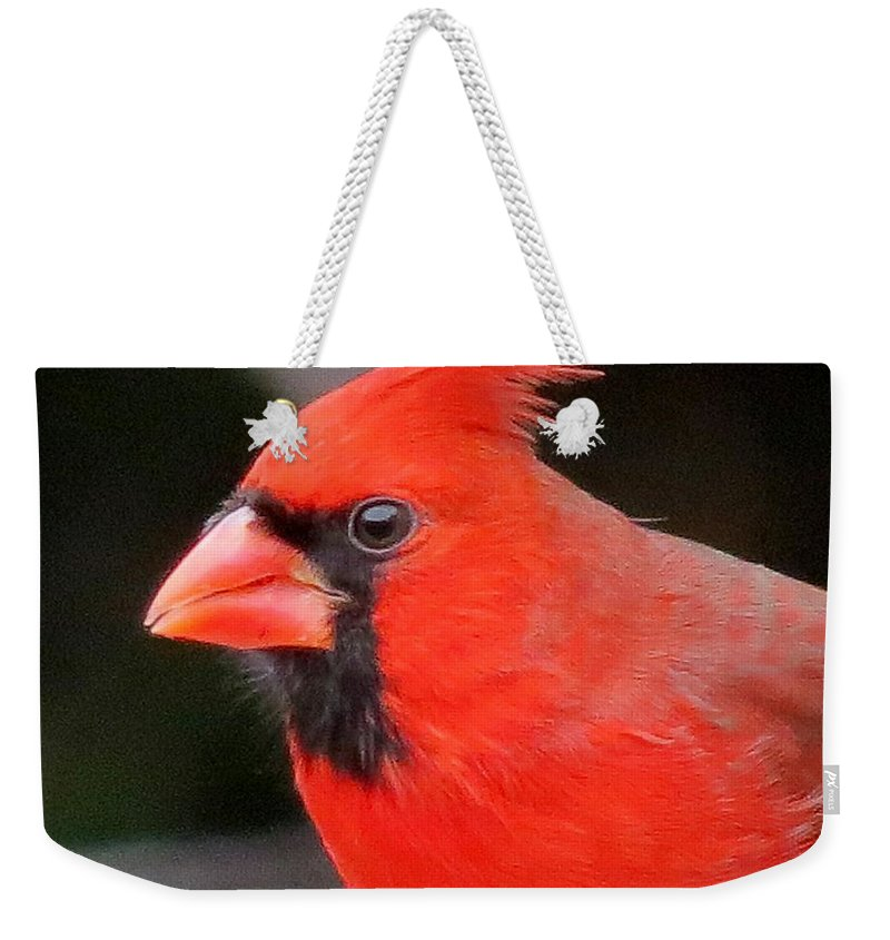 Male Cardinal Weekender Tote Bag featuring the photograph Portrait Of Male Cardinal by MTBobbins Photography