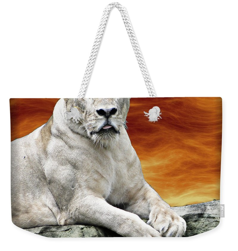 Lioness Weekender Tote Bag featuring the photograph Posing Lioness by Ben Yassa