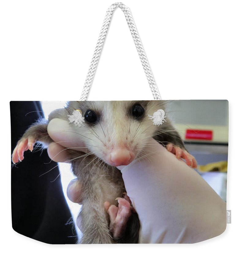 Opossum Weekender Tote Bag featuring the photograph Possie Time by Art Dingo