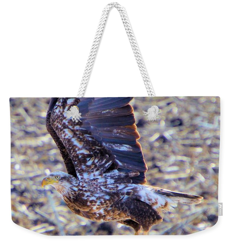 Bald Eagle Weekender Tote Bag featuring the photograph Posted by Bonfire Photography