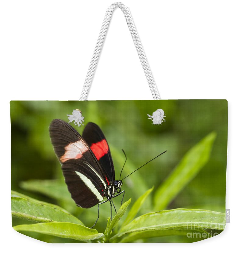 Postman Butterfly Weekender Tote Bag featuring the photograph Postman Butterfly On Green by Bryan Keil