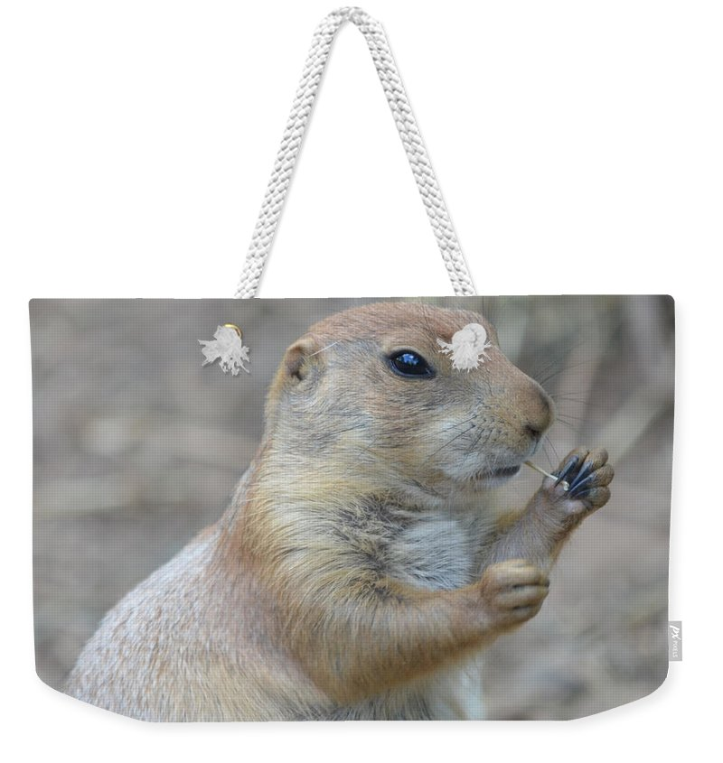 Prairie Weekender Tote Bag featuring the photograph Prairie Dog Cleaning His Teeth by Richard Bryce and Family