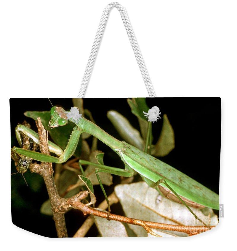 Nature Weekender Tote Bag featuring the photograph Praying Mantis by Millard H. Sharp