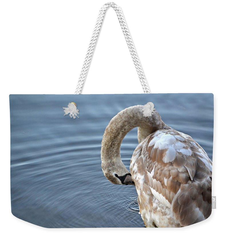 Swan Weekender Tote Bag featuring the photograph Preening by Jatinkumar Thakkar