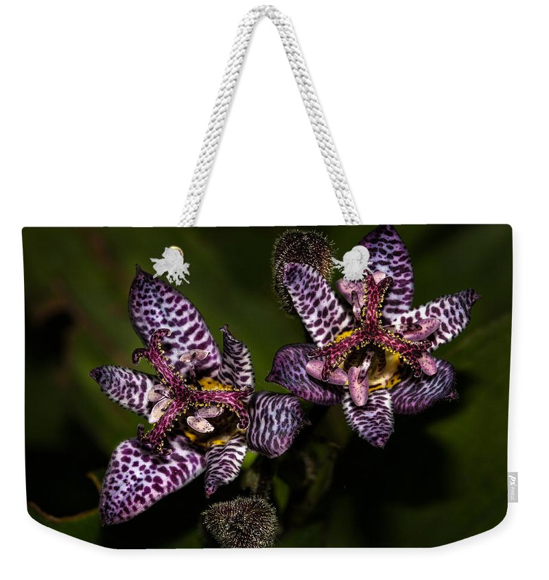 Jean Noren Weekender Tote Bag featuring the photograph Prettier Than A Toad by Jean Noren