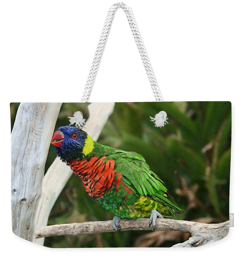 Pretty Bird Weekender Tote Bag featuring the photograph Pretty Bird by Ellen Henneke