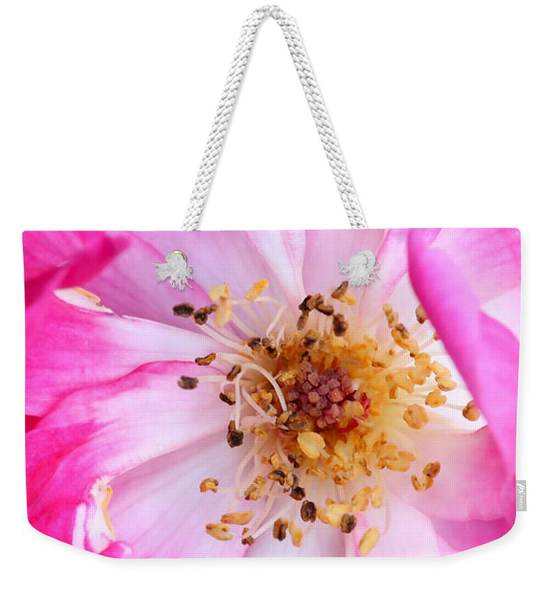 Macro Weekender Tote Bag featuring the photograph Pretty In Pink Rose Close Up by Sabrina L Ryan