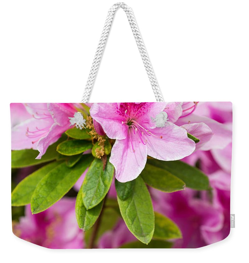 Pink Weekender Tote Bag featuring the photograph Pretty In Pink - Spring Flowers In Bloom. by Jamie Pham