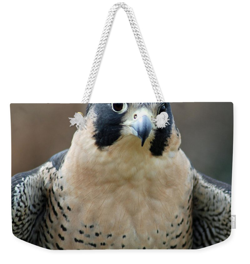 Falcon Weekender Tote Bag featuring the photograph Pretty Peregrine by Richard Bryce and Family