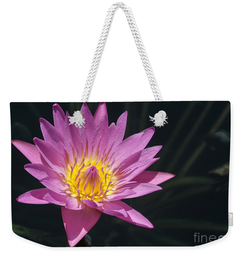 Landscape Weekender Tote Bag featuring the photograph Pretty Pink And Yellow Water Lily by Sabrina L Ryan