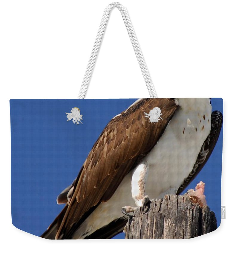 Blue Sky Weekender Tote Bag featuring the photograph Prey For The Osprey by Quinn Sedam