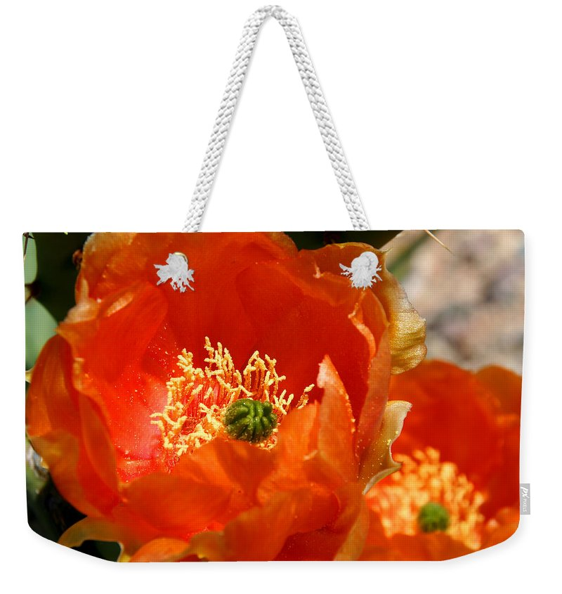 Cactus Weekender Tote Bag featuring the photograph Prickly Pear In Bloom by Joe Kozlowski