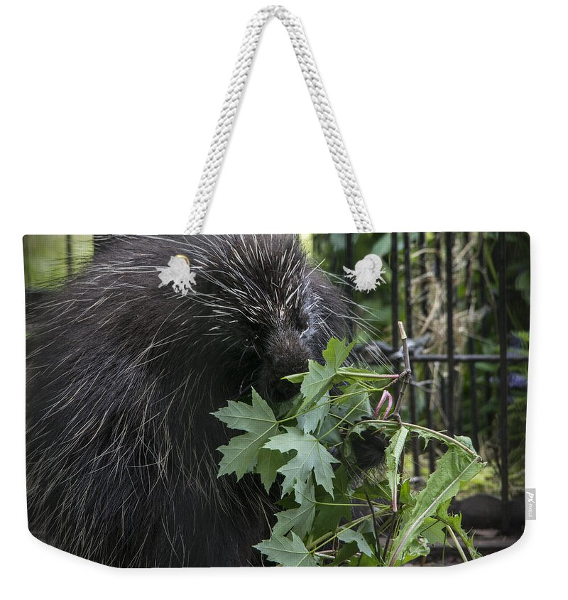 Porcupine Weekender Tote Bag featuring the photograph Prickly Pete by Jayne Gohr