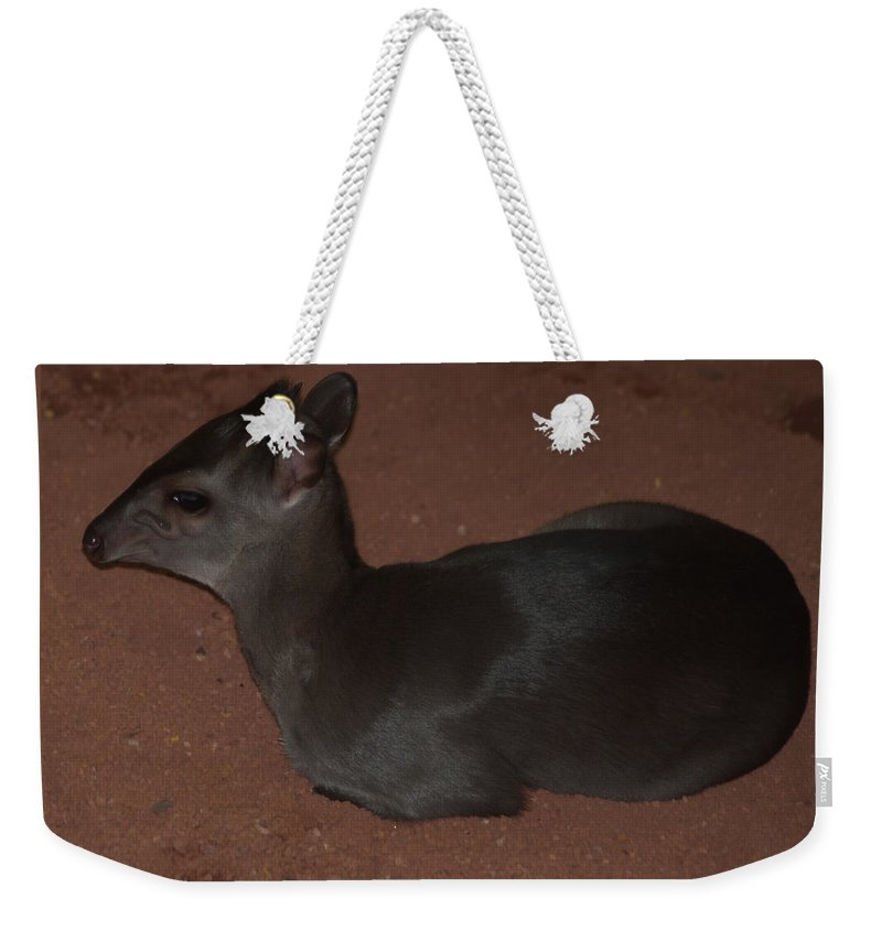Animal Weekender Tote Bag featuring the photograph Profile Of A Blue Duiker by Jill Mitchell