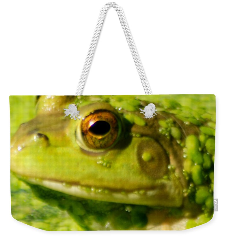 Green Algae Weekender Tote Bag featuring the photograph Profiling Frog by Optical Playground By MP Ray