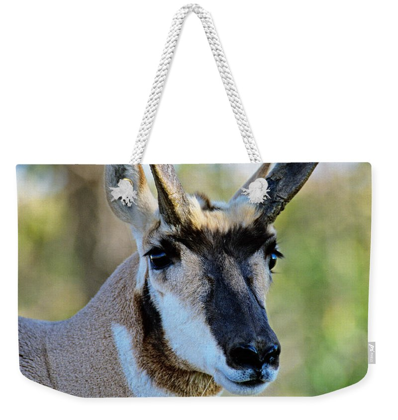 Pronghorn Antelope Weekender Tote Bag featuring the photograph Pronghorn Antelope Portrait by Timothy Flanigan