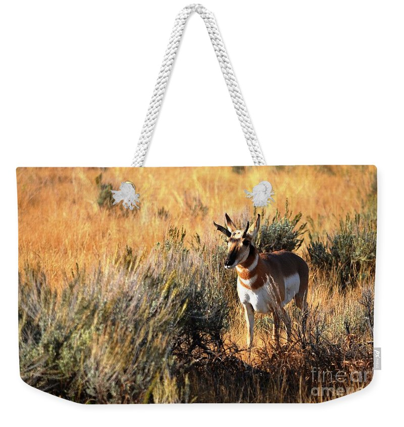 Wildlife Weekender Tote Bag featuring the photograph Pronghorn Buck by Deanna Cagle