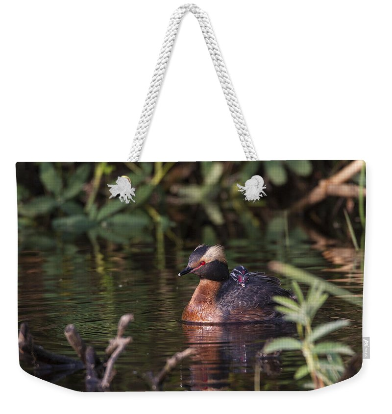 Doug Lloyd Weekender Tote Bag featuring the photograph Protected by Doug Lloyd