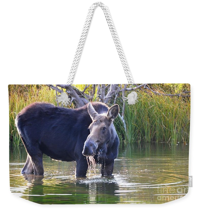 Moose Weekender Tote Bag featuring the photograph Protective Mother by Deanna Cagle